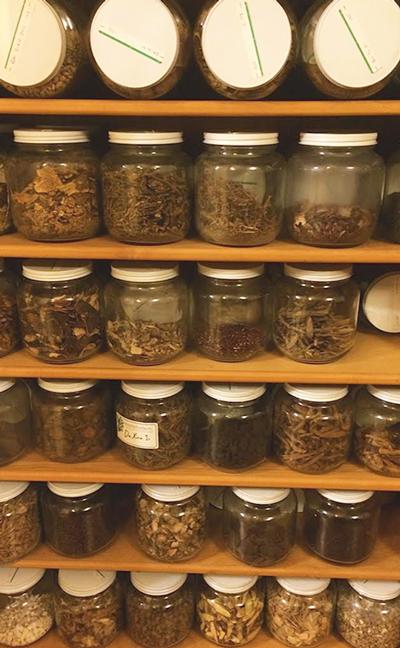 Herbal-Pharmacy-2